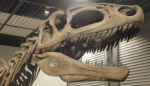 アロサウルスが見た世界