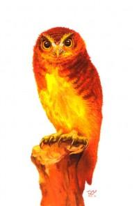 フクロウ・イメージ1